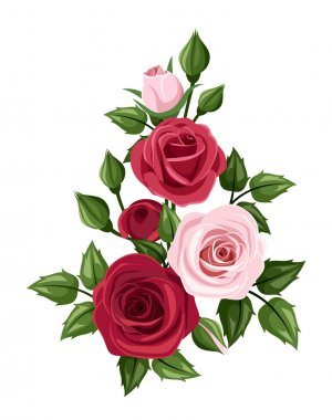 Vector branch with red and pink roses, rose buds and leaves isolated on a white background. stock vector