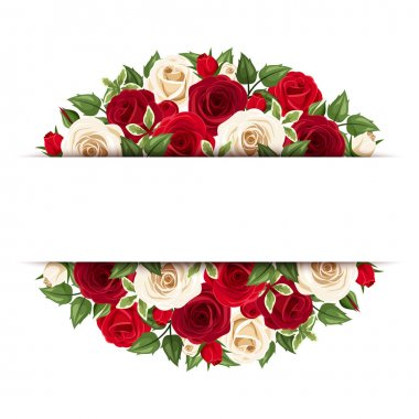 Background with red and white roses. Vector eps-10.