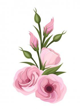 Pink lisianthus flowers. Vector illustration.