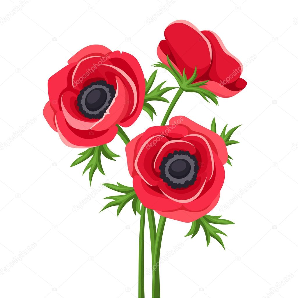 Vector illustration of red anemone flowers with stems on a white background. — Vector by Naddya