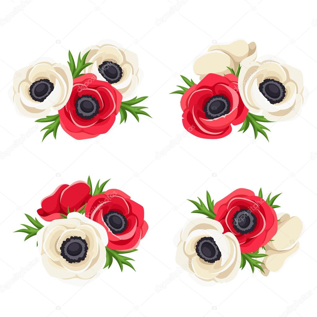 Red and white anemone flowers. Vector illustration.