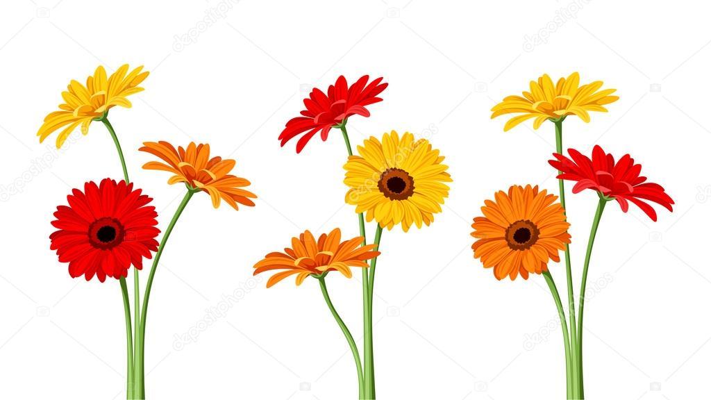 Gerbera flowers. Vector illustration.