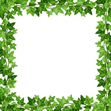 Frame with green ivy leaves. Vector illustration.