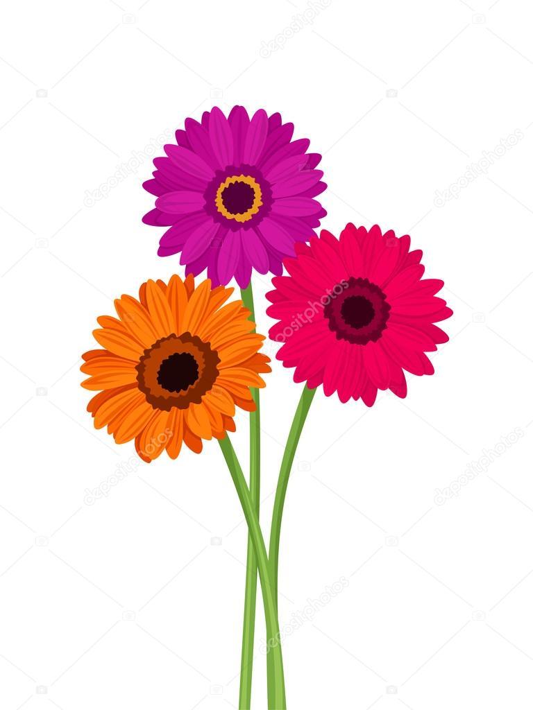 Pink Orange And Purple Gerbera Flowers Vector Illustration