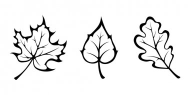 Autumn leaves. Vector black contours.
