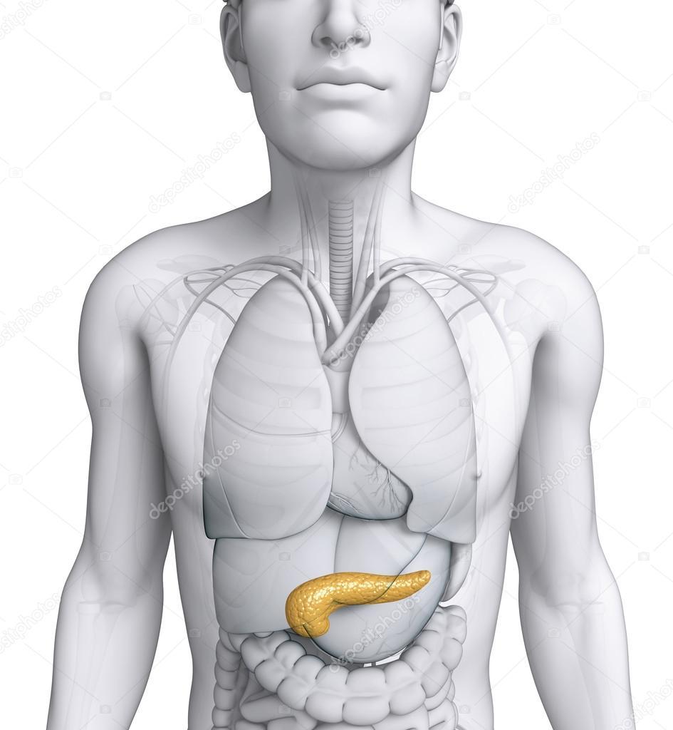 Anatomía masculina páncreas — Fotos de Stock © pixdesign123 #52417267