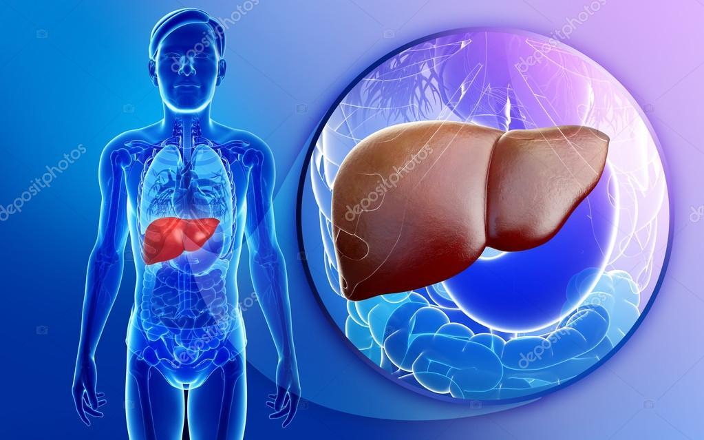 weibliche Lunge Anatomie — Stockfoto © pixdesign123 #55468067