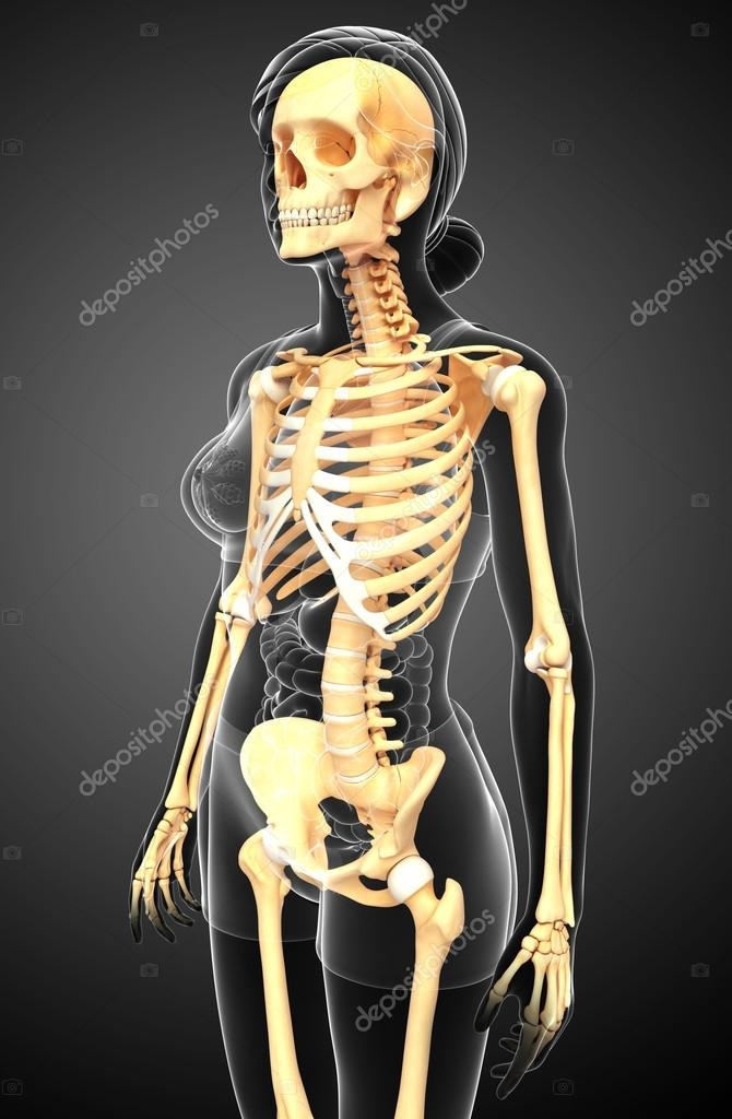 Human Skeleton Side View Stock Photo Pixdesign123 55492493
