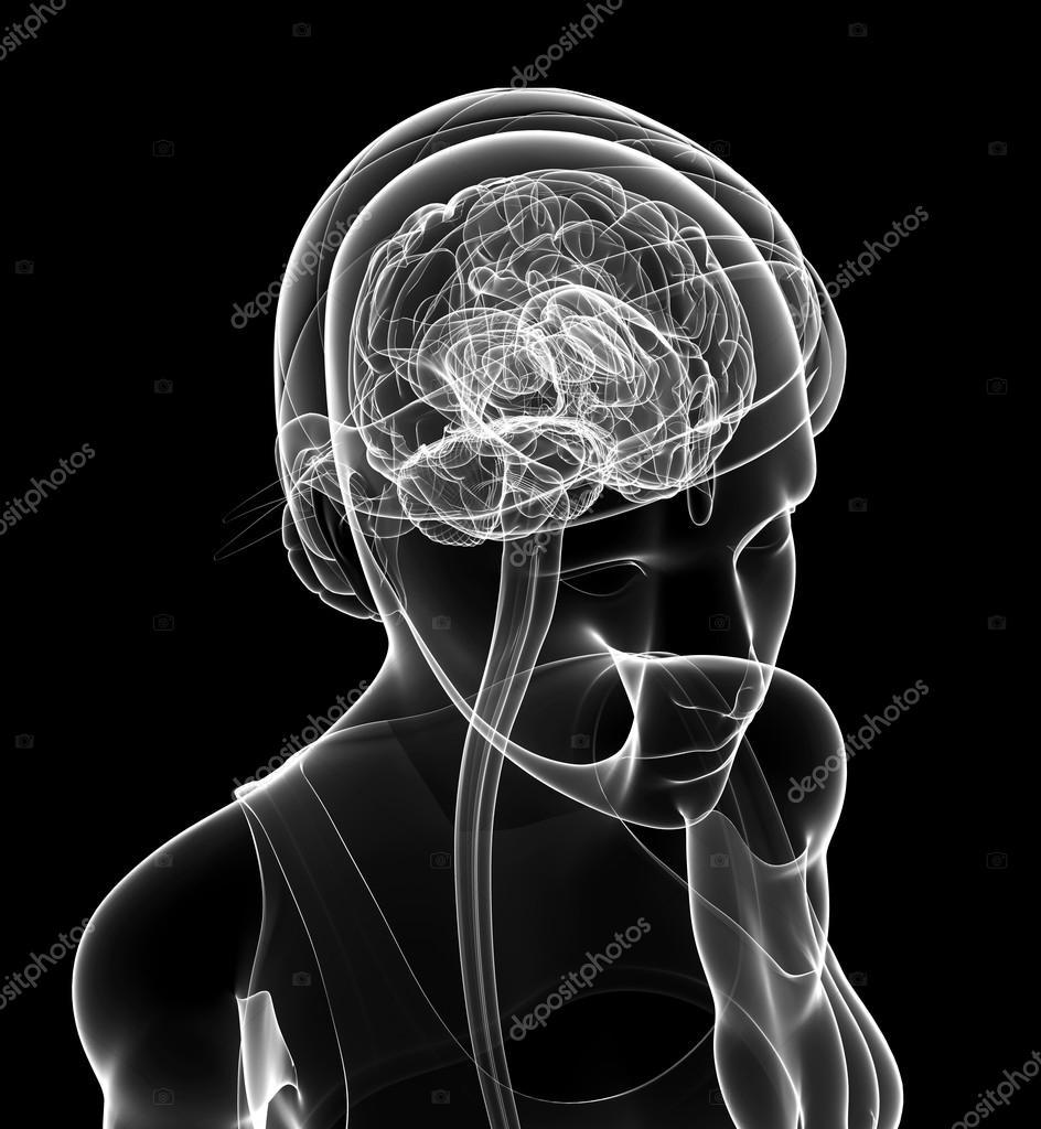 Weibliche Xray Gehirn Anatomie Kunstwerk — Stockfoto © pixdesign123 ...