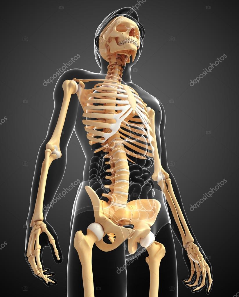 vista lateral de esqueleto humano — Foto de stock © pixdesign123 ...