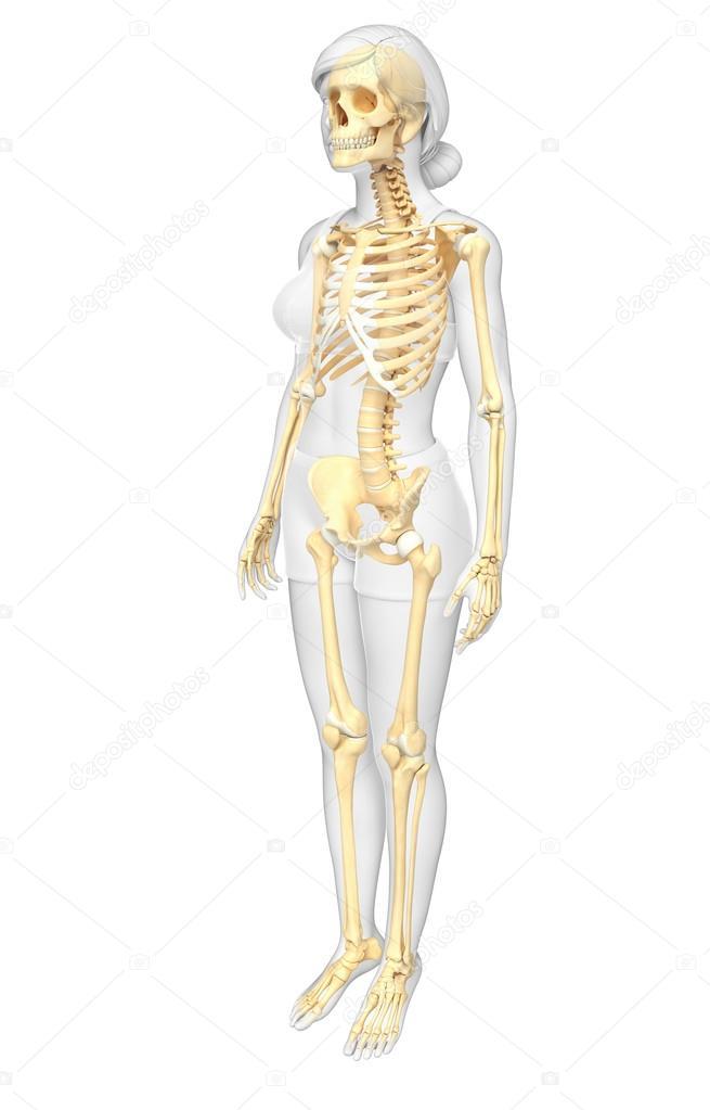 vista lateral de esqueleto humano — Fotos de Stock © pixdesign123 ...