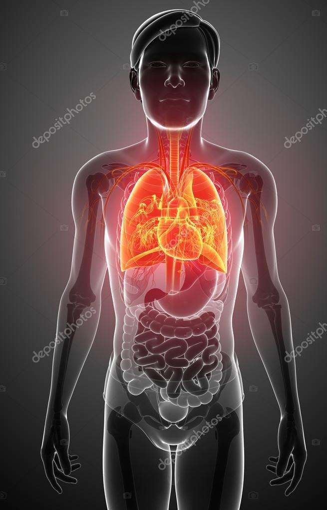 männliche Lunge Anatomie — Stockfoto © pixdesign123 #55499277