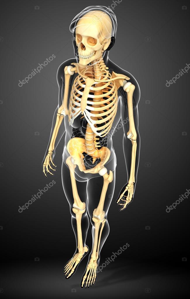 Menschliches Skelett Seitenansicht — Stockfoto © pixdesign123 #55502445