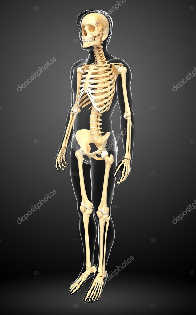 Human Skeleton Side View Stock Photo Pixdesign123 55503763