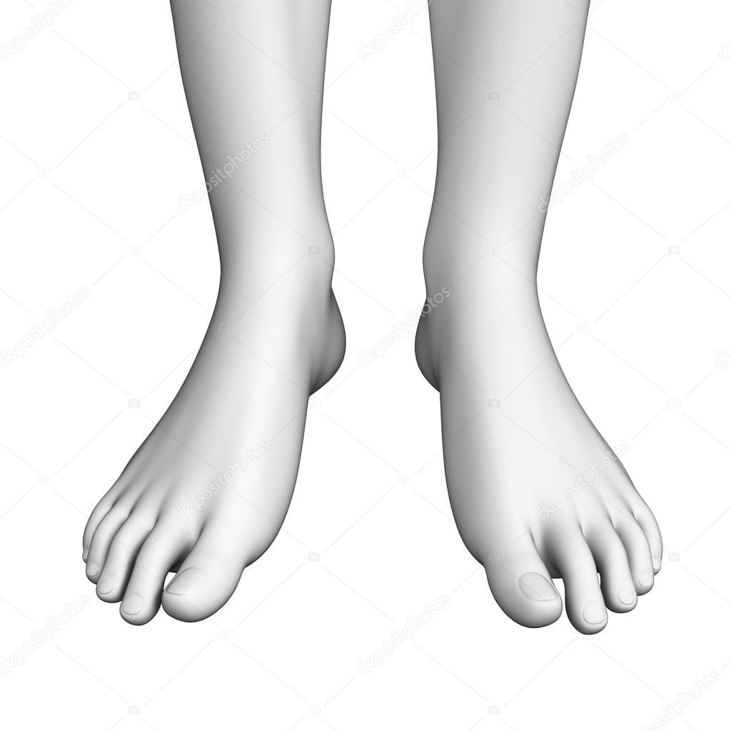 Ilustraciones de la anatomía del pie — Fotos de Stock © pixdesign123 ...