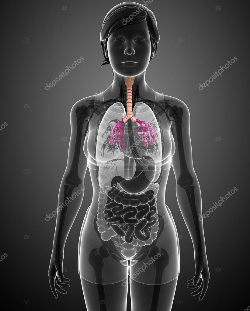 anatomía femenina garganta — Foto de stock © pixdesign123 #55571225