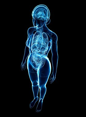 Female x-ray digestive and nervous system artwork