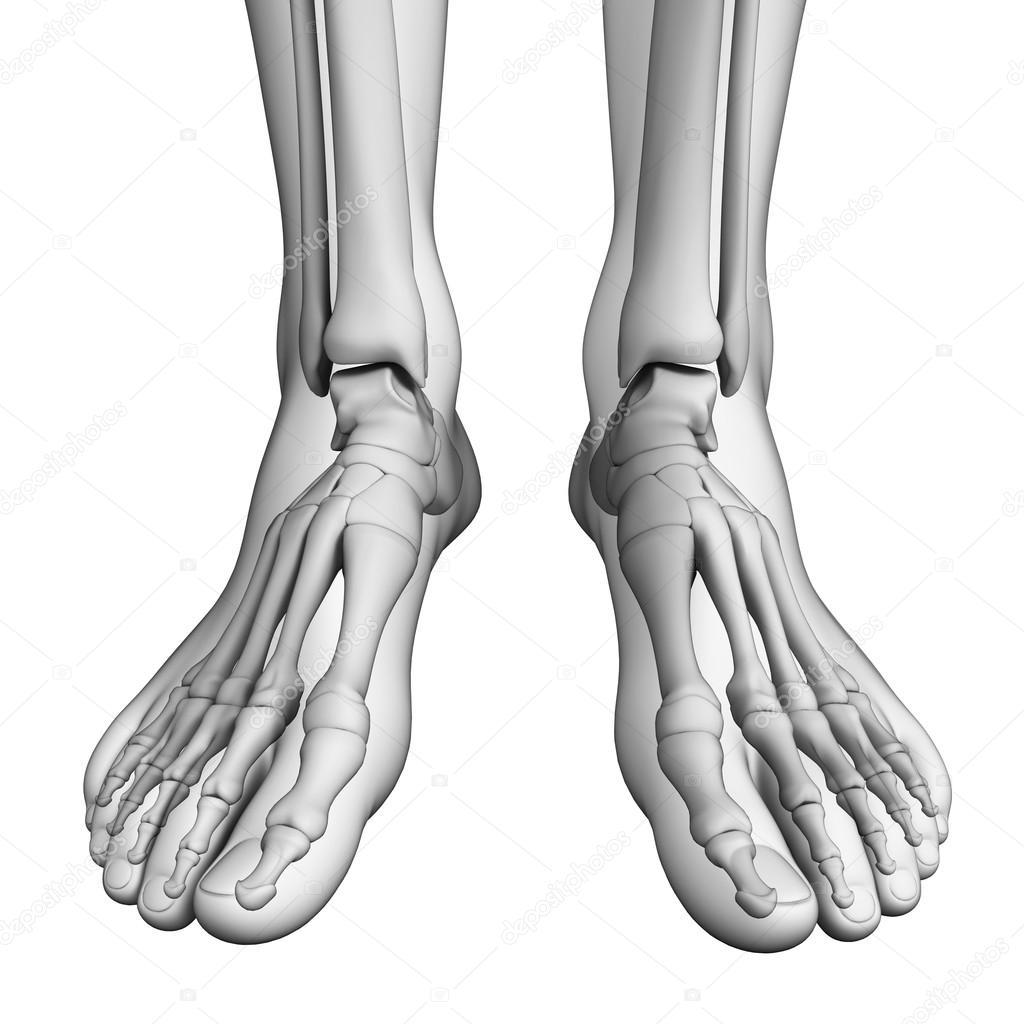 Menschlicher Fuß Kunstwerk — Stockfoto © pixdesign123 #55649443