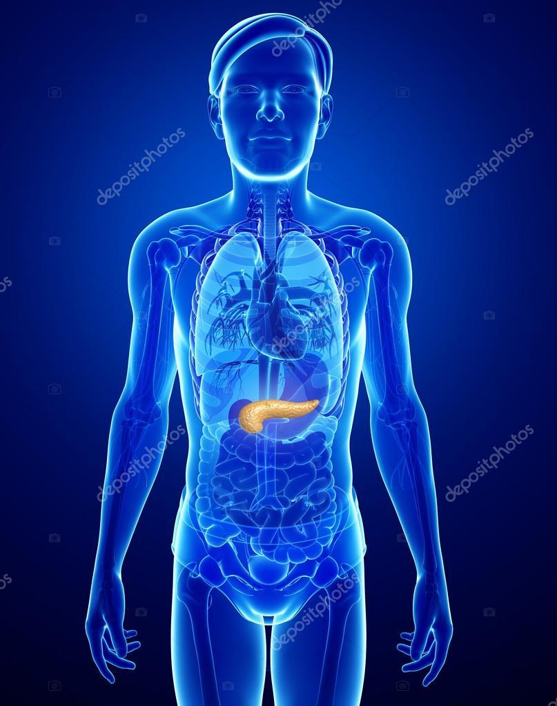 Male pancreas anatomy — Stock Photo © pixdesign123 #55651619