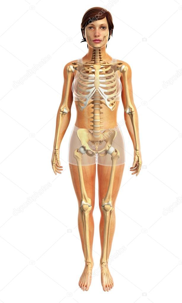 Anatomie des menschlichen Körpers — Stockfoto © pixdesign123 #81631934