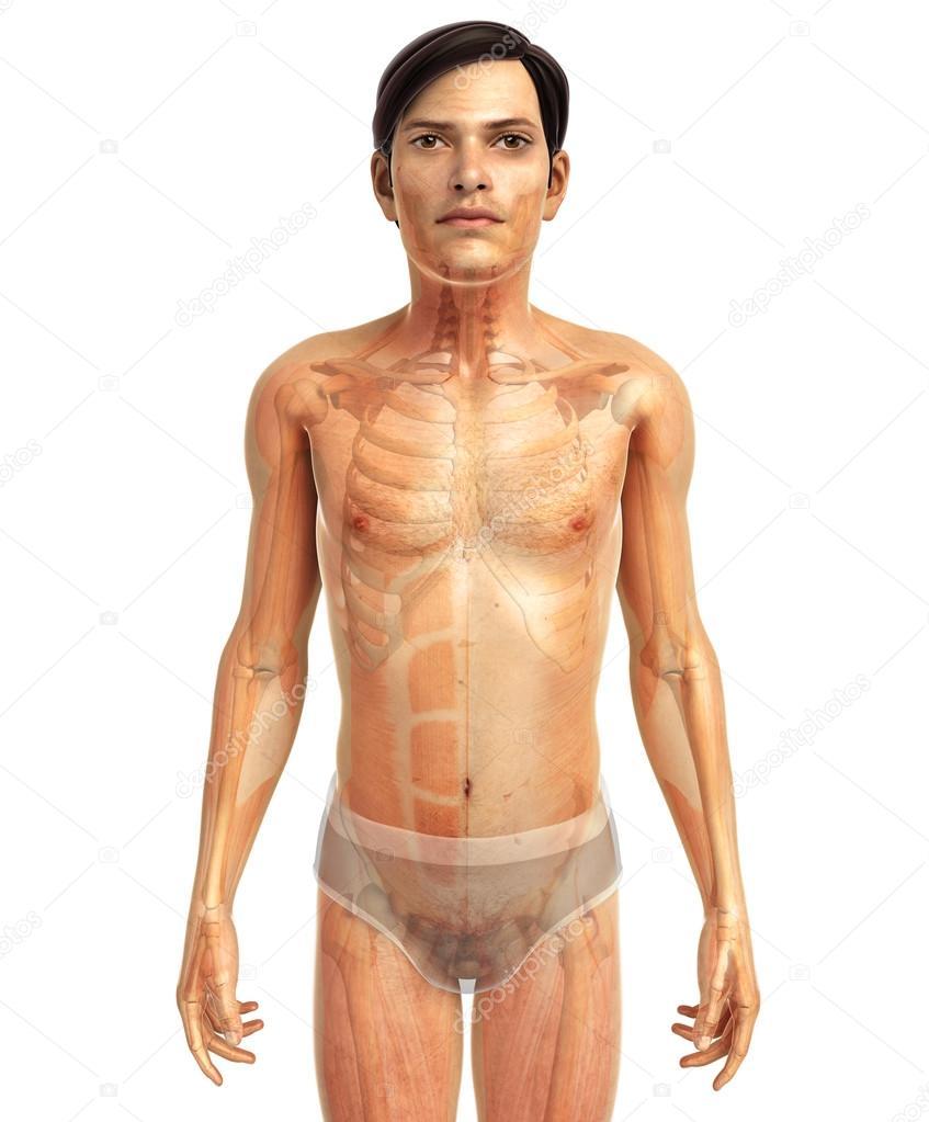 Anatomie des menschlichen Körpers — Stockfoto © pixdesign123 #81632002