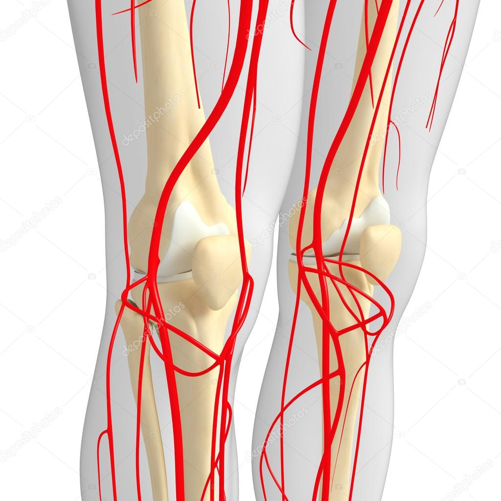 Human Arterial System Stock Photo Pixdesign123 81634304