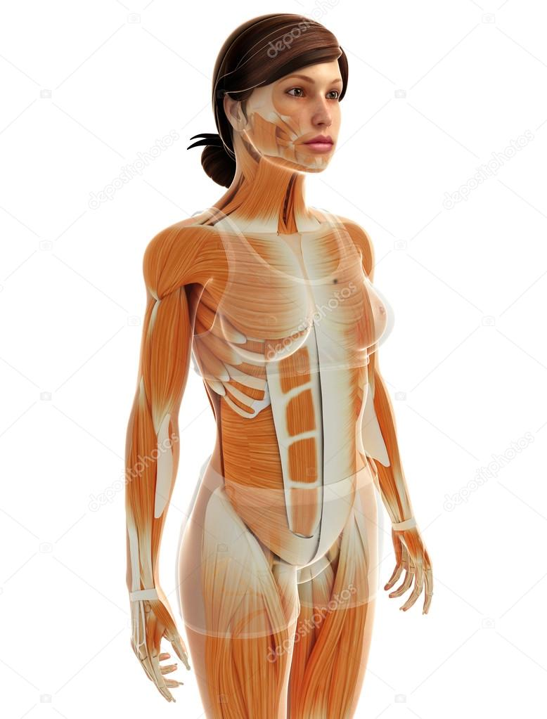 Анатомия женщины и секса