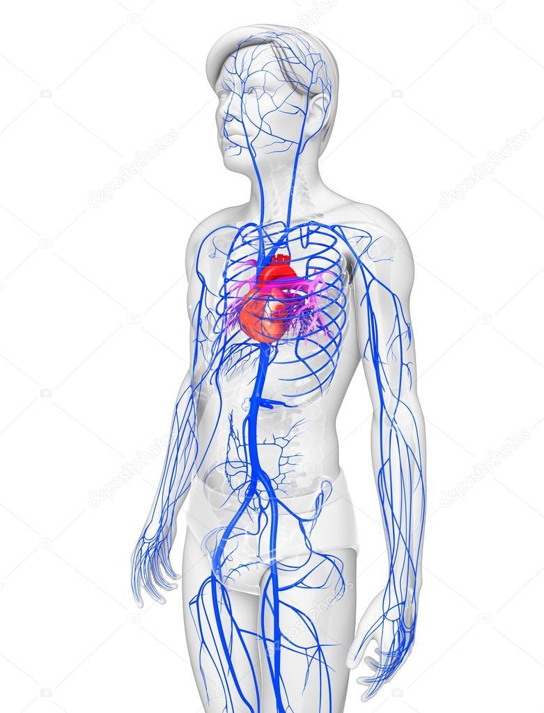 Ziemlich Retropharyngealraum Anatomie Bilder - Anatomie Ideen ...