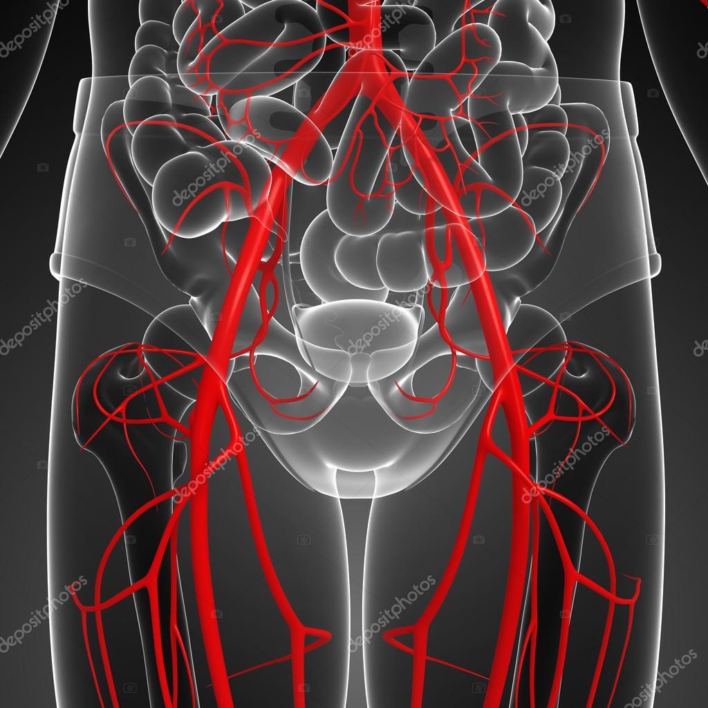 Sistema arterial humano — Foto de stock © pixdesign123 #81639070