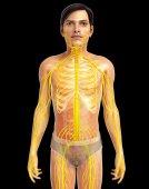 Human Nervous System Artwork