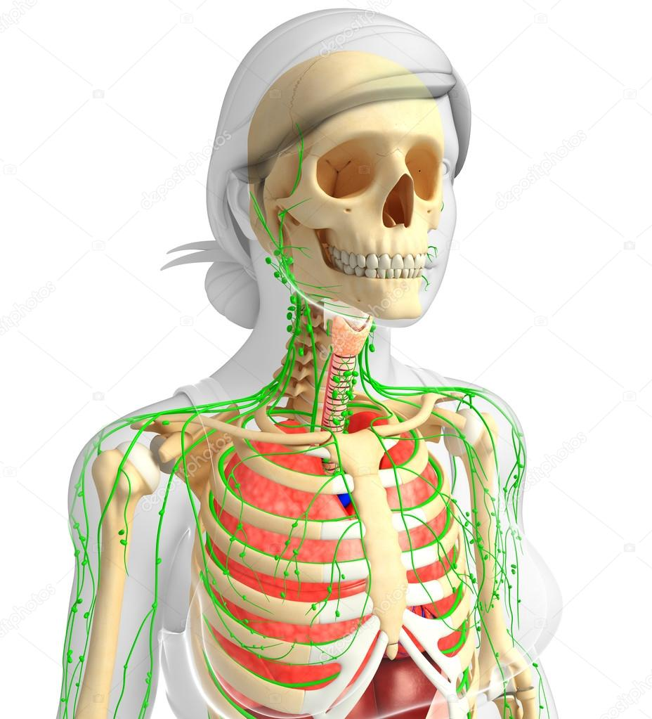 burn respiratory system and 18 year old female The respiraory t system the respiratory system sup- plies oxygen to the body, carries off carbon dioxide—a waste product of body processes—and helps regulate acid.