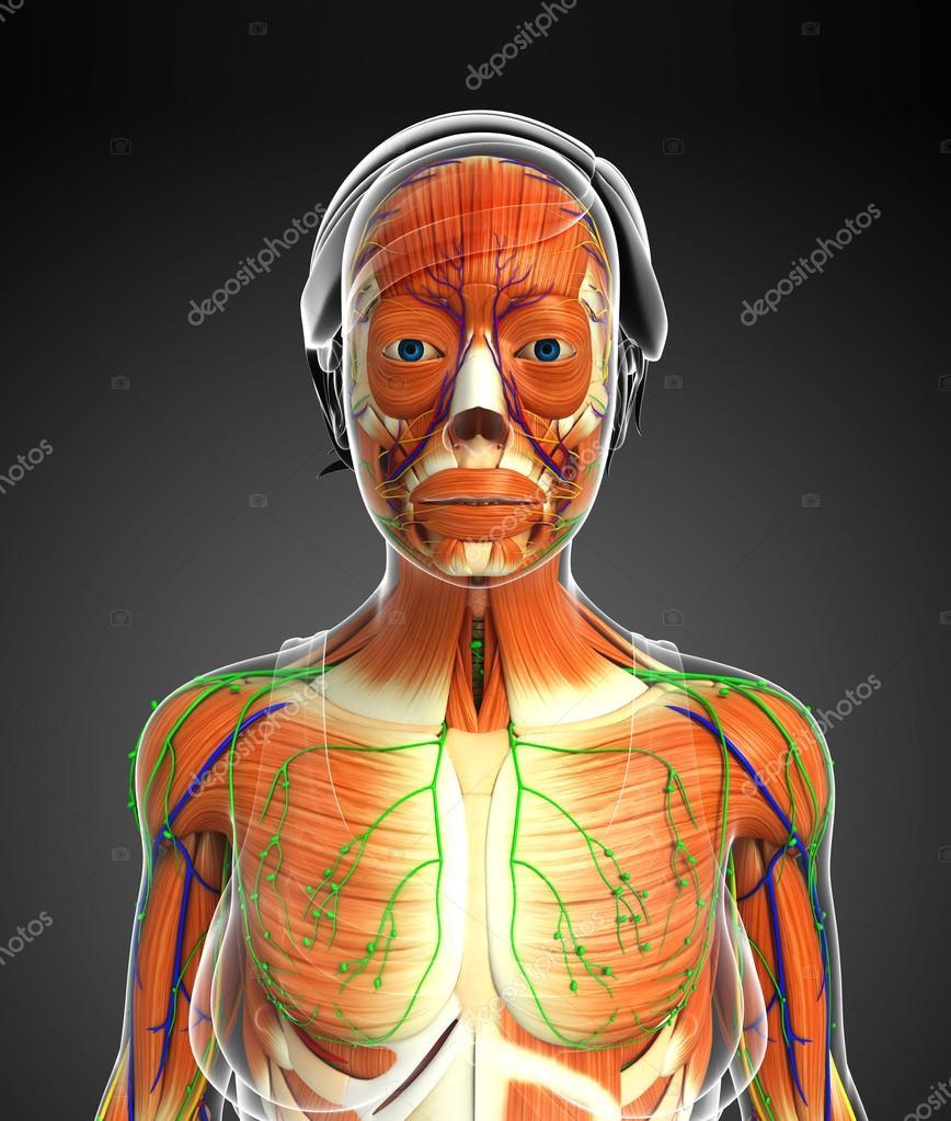 Tolle Anatomie Des Menschlichen Beinmuskeln Zeitgenössisch ...