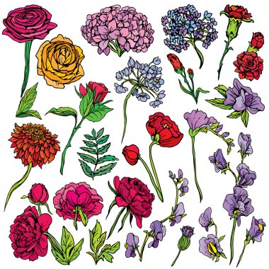 Set of Realistic graphic flowers - hand drawn images isolated on