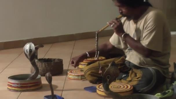 INDURUWA, SRI LANKA - 22 MAR 2014:The performance of the Sri Lankan tamer poison