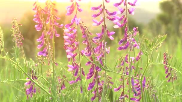Grass krajina v nádherný západ slunce červené světlo