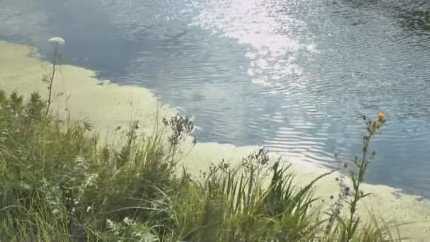 tekoucí řeky a zelené rákosí