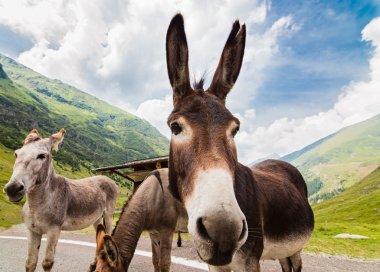 Funny donkey on road