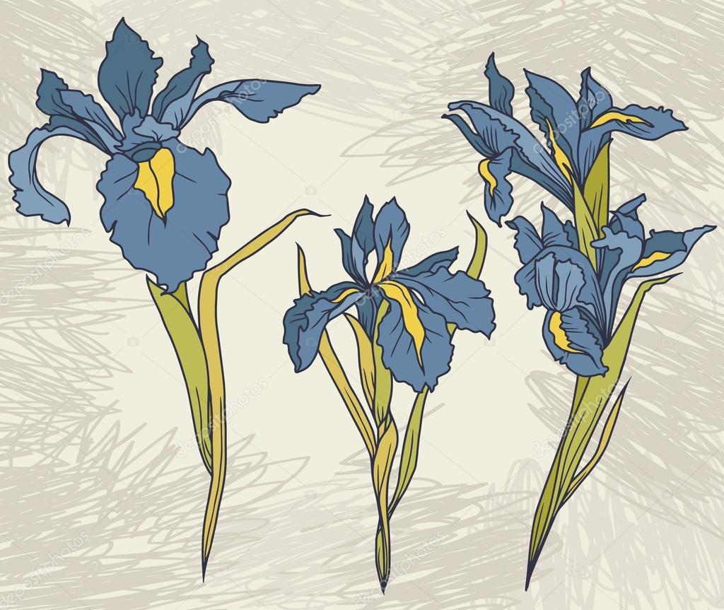 Set beautiful irises flowers on hand drawn background