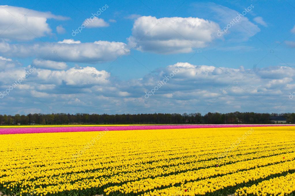 Утро цветы фото картинки