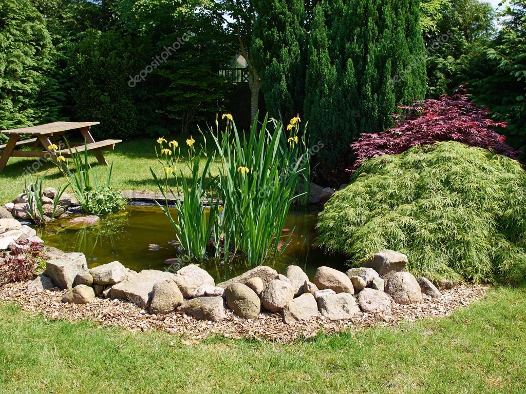Schöne Klassische Fische Garten Teich Garten Ringelblume Hintergrund U2014  Stockfoto