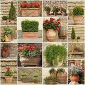 Collection of elegant clay retro planters