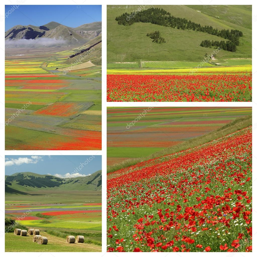 Images with colorful flowery fields