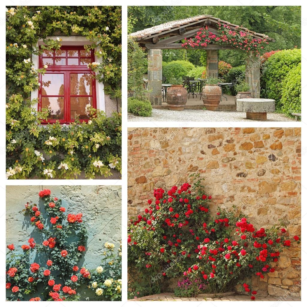 Klettern Im Toskanischen Garten Rosen Stockfoto