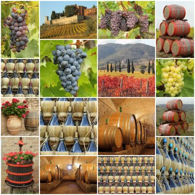 Wine tradition in Tuscany