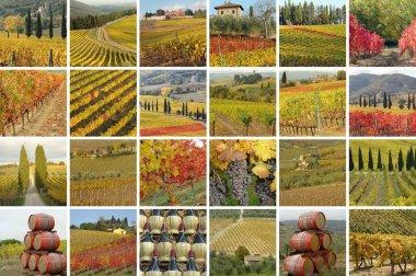 Fantastic tuscan vineyards