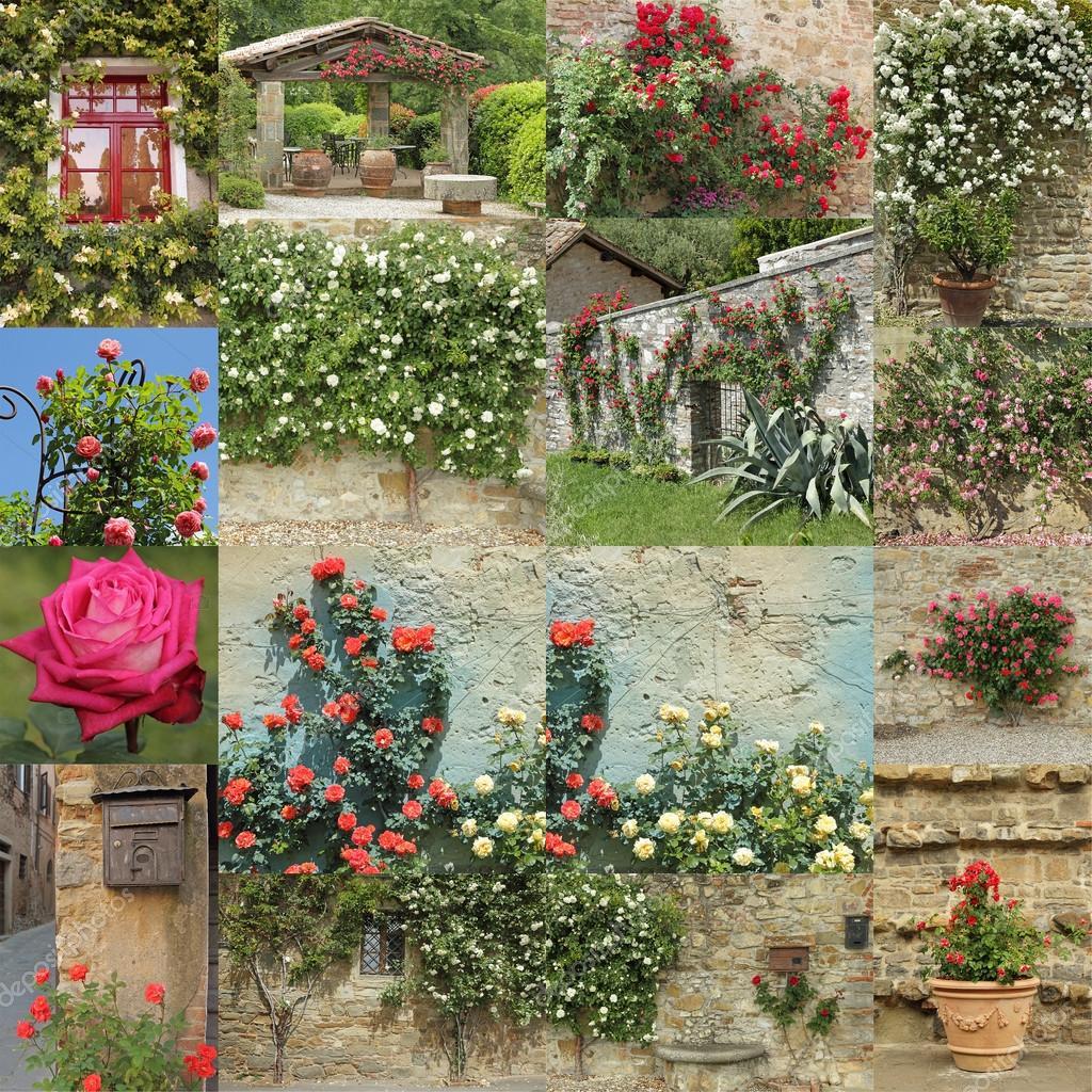 Fotomontaje Jardin De Rosas Montaje Jardín De Rosas Foto De