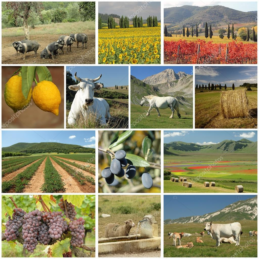 agriculture industry collage