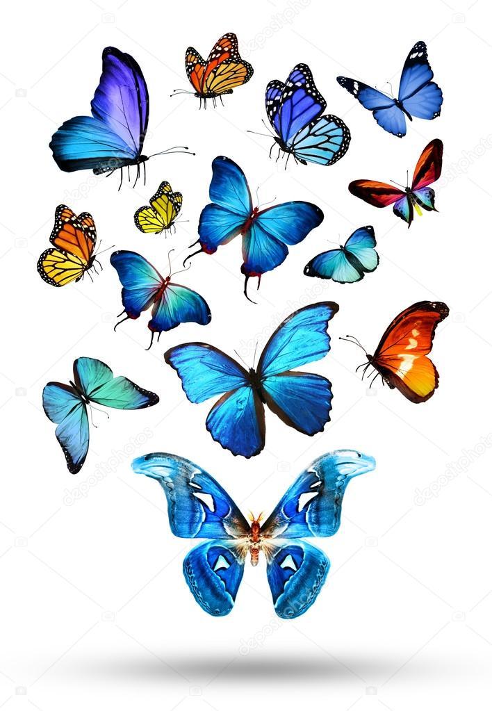 Farfalle colorate foto stock sun tiger 52246827 for Foto farfalle colorate