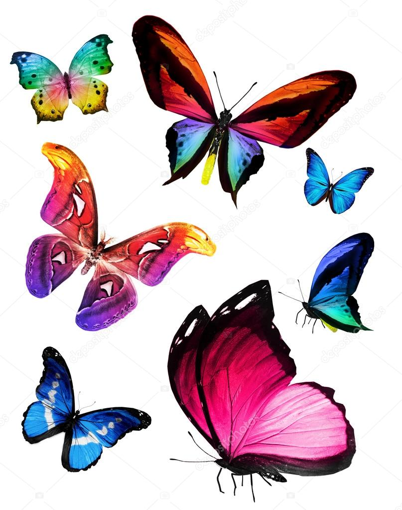 Many colorful butterflies — Stock Photo © sun_tiger #52708803