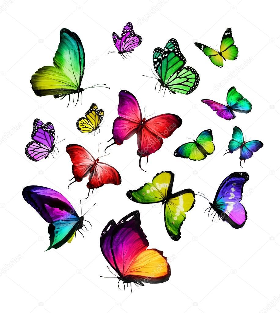 farfalle colorate foto stock sun tiger 56230145